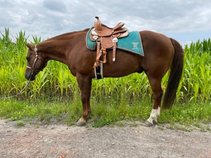 Youth 12 inch Western Show Saddle Fits Horse